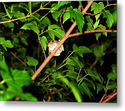 Tree Toad Metal Print by Tamara Stickler