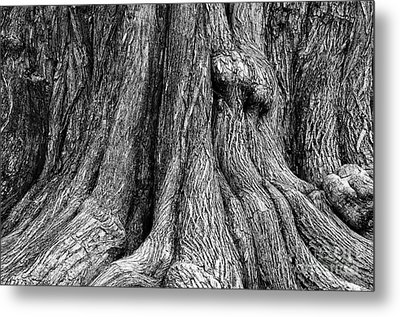 Tree Trunk Closeup Metal Print by Danny Hooks
