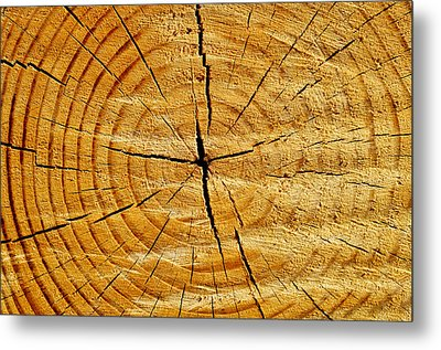 Metal Print featuring the photograph Tree Trunk by Fabrizio Troiani