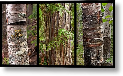 Tree Wear By Nature Metal Print