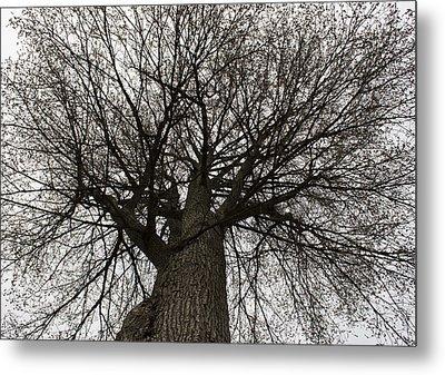 Tree Web Metal Print