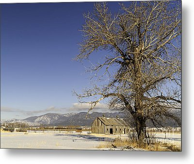 Tree With Barn Metal Print by Sue Smith
