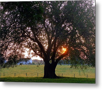 Tree With Fence. Metal Print by Joseph Skompski