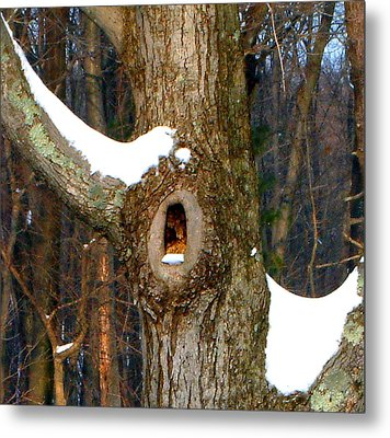 Tree With Snow Metal Print