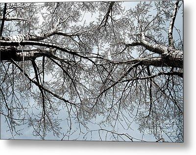 Trees  1 Metal Print