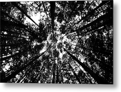 Metal Print featuring the photograph Trees Above Me by Daniel Woodrum