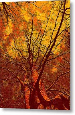 Metal Print featuring the photograph Trees by Allen Beilschmidt