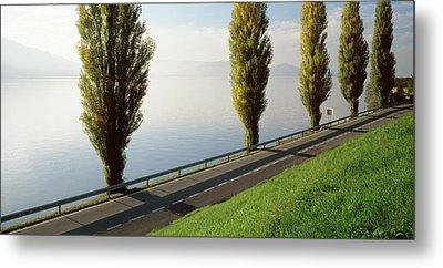 Trees Along A Lake, Lake Zug Metal Print by Panoramic Images
