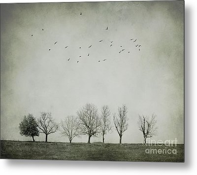 Trees And Birds Metal Print by Diana Kraleva