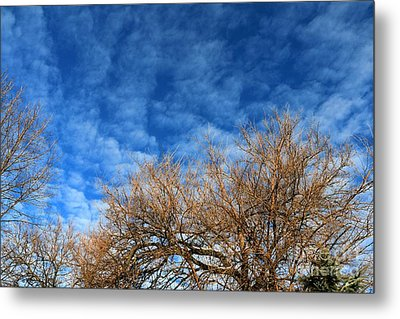 Trees And Clouds Metal Print