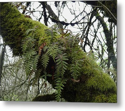 Trees And Ferns And Moss Ecosystem Metal Print by Lizbeth Bostrom