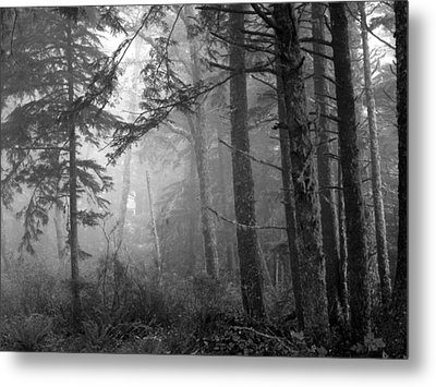 Metal Print featuring the photograph Trees And Fog by Tarey Potter