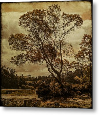 Trees And Hot Sand Metal Print