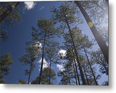 Metal Print featuring the photograph Trees And Nature by Charles Beeler