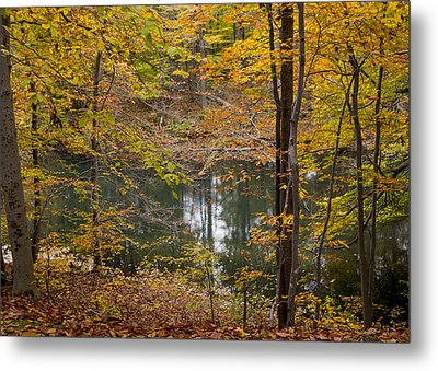 Trees And Water  Metal Print