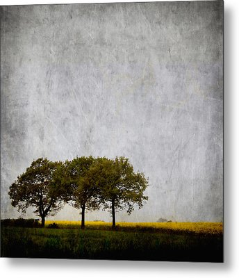 Trees At Sunrise Metal Print by Carol Leigh