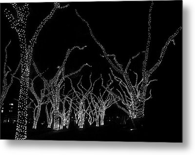 Metal Print featuring the photograph Trees Bejeweled II by Jim Snyder