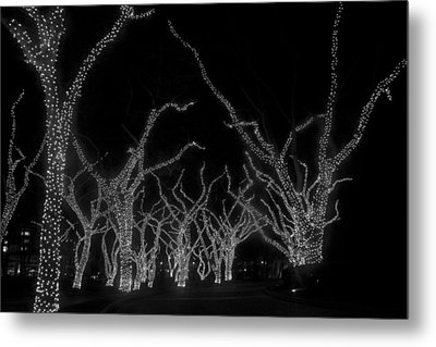 Metal Print featuring the photograph Trees Bejeweled by Jim Snyder