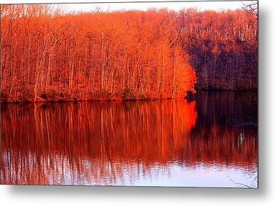 Trees By River Metal Print by Jose Lopez