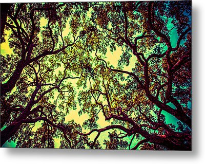 Trees Closing In Metal Print by J Riley Johnson