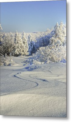 Trees Covered With Snow In A Sunny Winter Day Metal Print