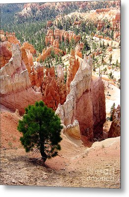 Metal Print featuring the photograph Tree's Eye View by Meghan at FireBonnet Art