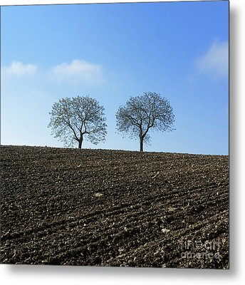 Trees In A Agricultural Landscape. Metal Print