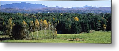 Trees In A Forest, Stowe, Lamoille Metal Print