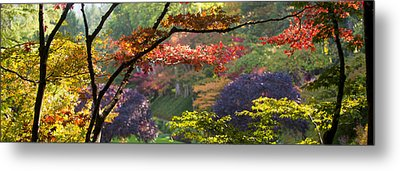 Trees In A Garden Butchart Gardens Metal Print by Panoramic Images