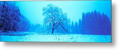 Trees In A Snow Covered Landscape Metal Print