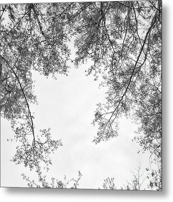 Trees In Black And White Metal Print by Priska Wettstein