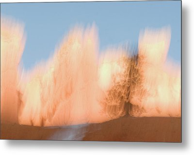 Trees In Bryce Canyon National Park Metal Print by Phil Schermeister