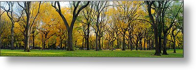 Metal Print featuring the photograph Trees In Central Park by Yue Wang