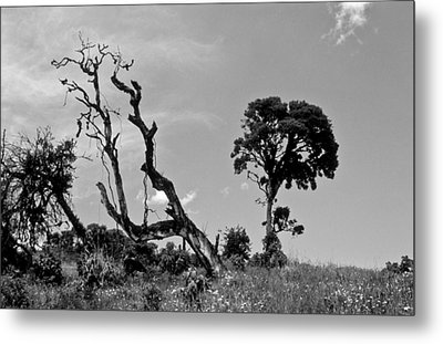 Metal Print featuring the photograph Trees In Cloud Forest by Lana Enderle