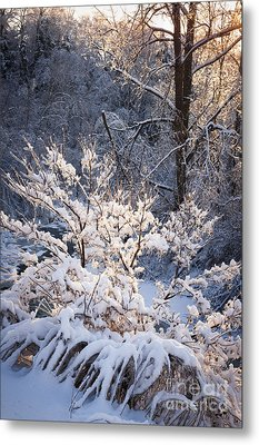 Trees In Forest After Winter Storm Metal Print