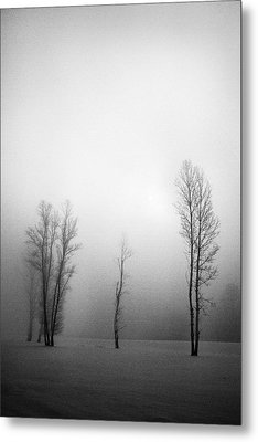 Trees In Mist Metal Print by Davorin Mance