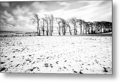 Trees In Snow Scotland Iv Metal Print by John Farnan