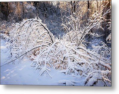 Trees In Snowy Forest After Winter Storm Metal Print