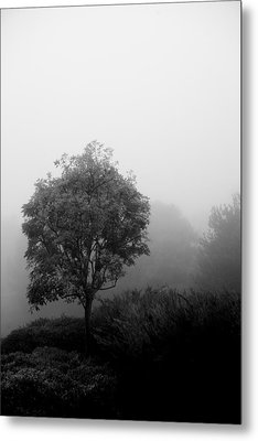 Trees In The Midst 2 Metal Print
