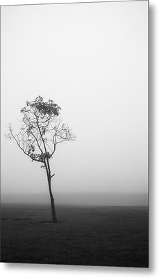 Trees In The Midst 4 Metal Print