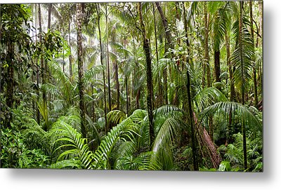 Trees In Tropical Rainforest, Eungella Metal Print by Panoramic Images