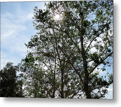 Trees At The Park Metal Print by Laurel Powell