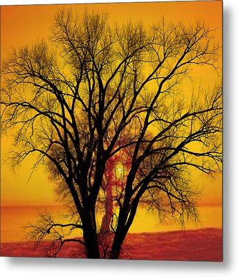 Trees Of Gold Metal Print