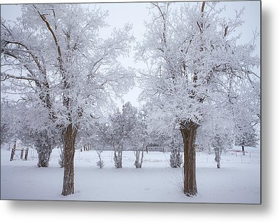 Trees Of Winter Metal Print by Darren  White