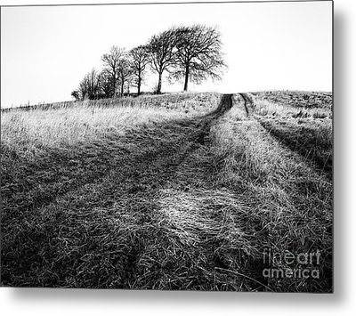 Trees On A Hill Metal Print by John Farnan