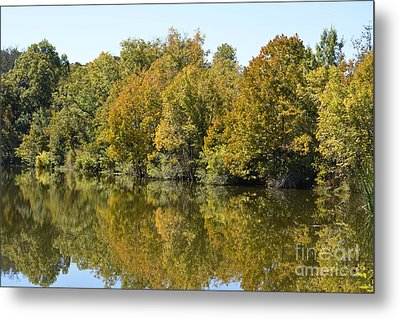Trees Starting To Have Color  Metal Print by Ruth  Housley