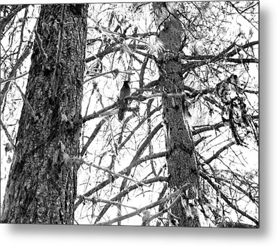 Metal Print featuring the photograph Trees by Tarey Potter