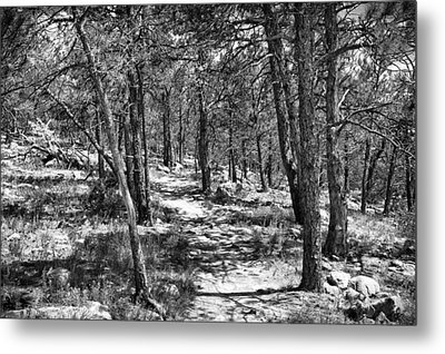 Trees Metal Print by Tony Boyajian
