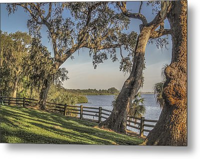 Metal Print featuring the photograph Trees With A View by Jane Luxton