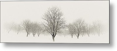 Treeternity Metal Print by Jim Speth